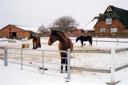 schoenbek_pferde_2010.jpg